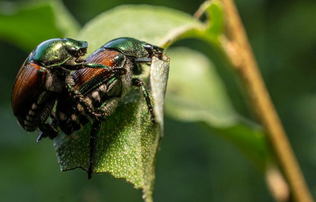 #naturephotography  #insect_macro  #macrophotographylove  #macro