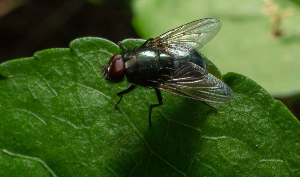 #fly #photoshoot  #photooftheday  #photonature  #photonaturemacr